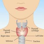 Adrenal_Anatomy-150w